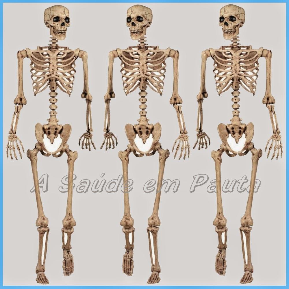 Ossos do Corpo Humano  Nomes, função e localização  - A
