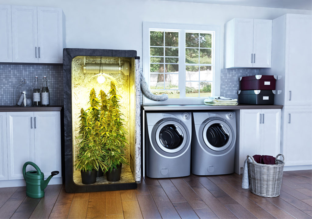 The Advantages and Disadvantages of Indoor Planting & Talking about Grow Tent you should to know The Green Room