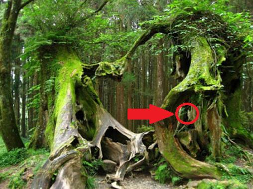 5 Kisah Asli Misteri Hutan Hoia Baciu + Foto Penampakan..!