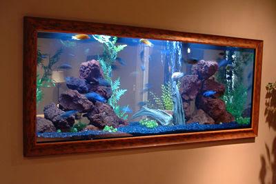 Cara Mudah Dekorasi Aquarium Dinding Rumah Minimalis