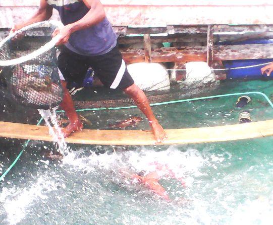 Belum Ada Jaminan, Aktivitas, Illegal Fishing, Di P.Jinato Takabonerate ,Bisa, Dihentikan