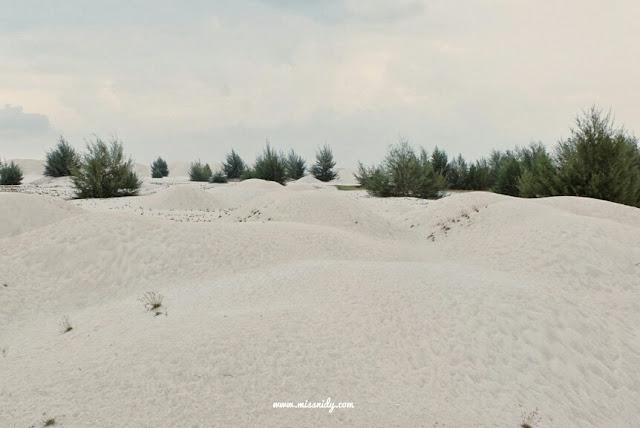 di malaysia juga ada padang pasir