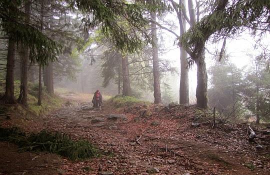 Przy krawędzi lasu, za którą rozciąga się polana Podlesie (czes. Podlesí).