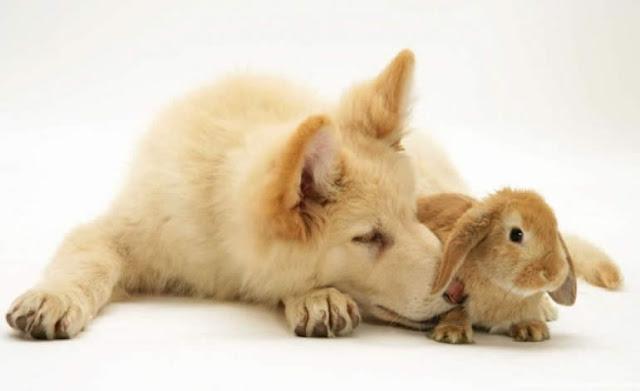A arte de julgas os outros - O cachorro e o coelho