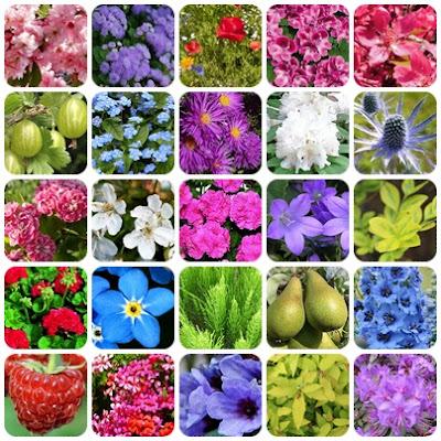Tanie sadzonki, Tanie nasiona, Tani ogród. TOP 10 dobrych pomysłów na tanie rośliny do naszych ogrodów.