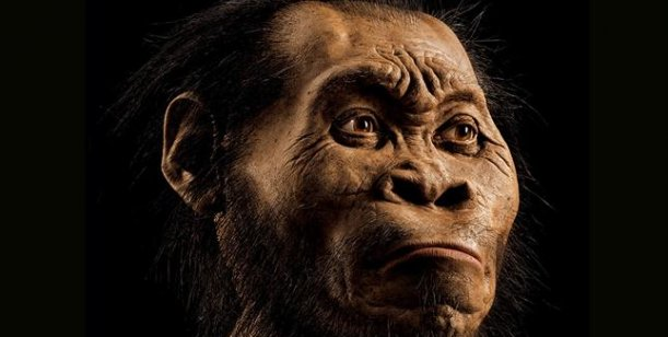 Descubrieron al Homo naledi, una nueva especie de antepasado humano 0001970332