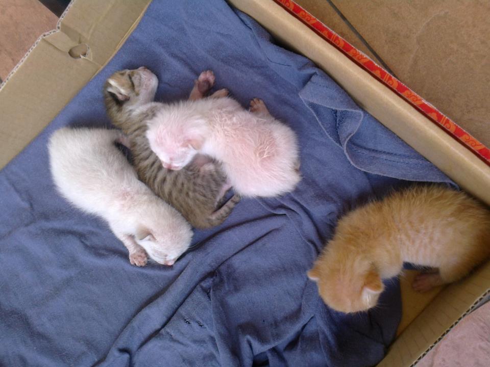 S C R A T C H Anak Anak Kucing Menyusu Pada Ibu Yang Dah Mati