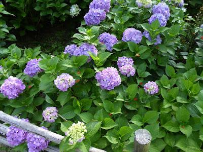 アジサイとザクロの花弁