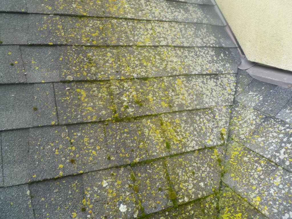 algae resistant roof shingles