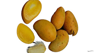 gambar buah mangga pari