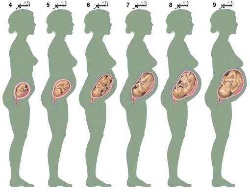 مراحل نمو الجنين خلال 9 شهور بيتي بيديا