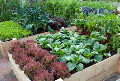 Greatest Simple and Easy Tips for Organic Gardening by Embellishinghome
