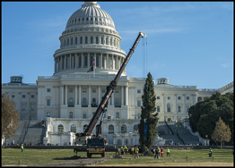 The 2019 U.S. Capitol Christmas Tree being lifted into place