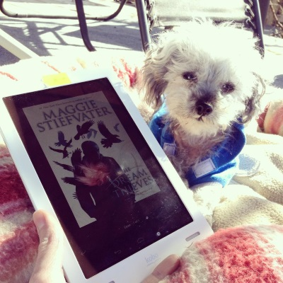 Murchie lays in a pink-striped dog bed with his front paws stretched out and his head tilted to one side. He wears a blue hoodie with white trim and is brilliantly lit by a sunbeam. In front of him is a white Kobo with the cover of The Dream Thieves on its screen. The cover appears dim in the sunlight, but the outline of a fire-hearted boy surrounded by ravens is visible through the gloom.