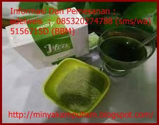 khasiat dan manfaat teh ashitaba