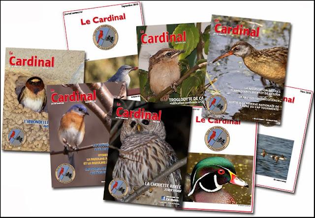 journal du Club des ornithologues de Châteauguay