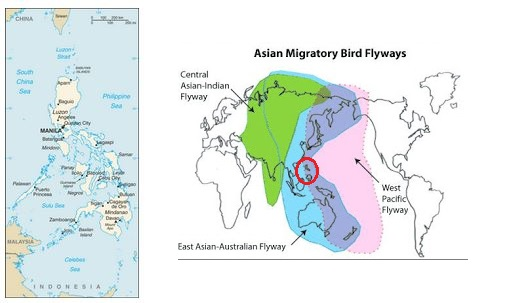 Asian avian flu