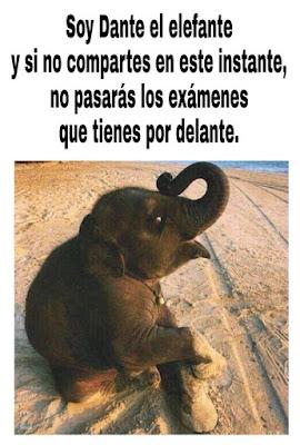 Meme de Dante el Elefante, humor de exámenes