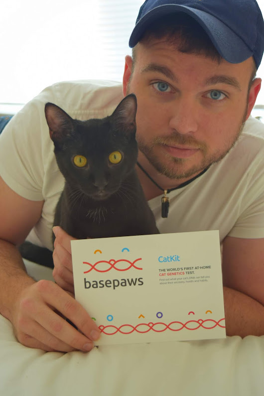 Find out more about your feline friend with Basepaws! ~ The Small Things