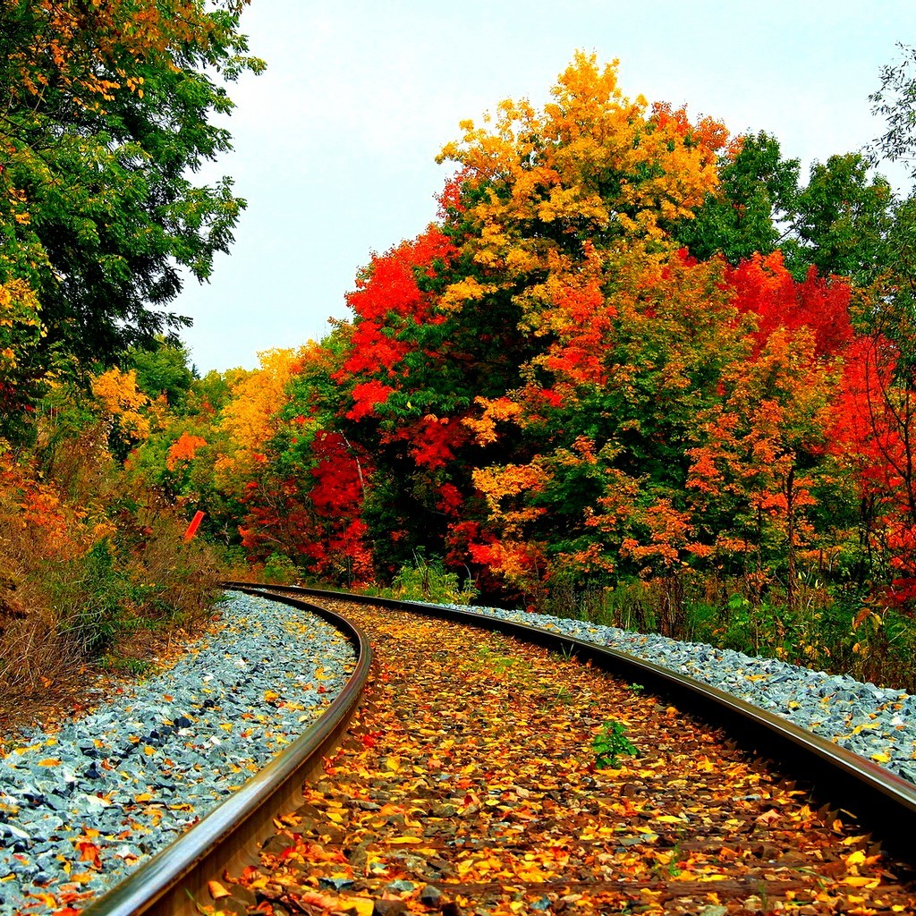 flowers sceneries natural wallpapers flower scenery fall nature autumn landscape beauty lovers pretty away train colorful