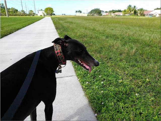 Dusty's visit to Tephford Park in Tamarac