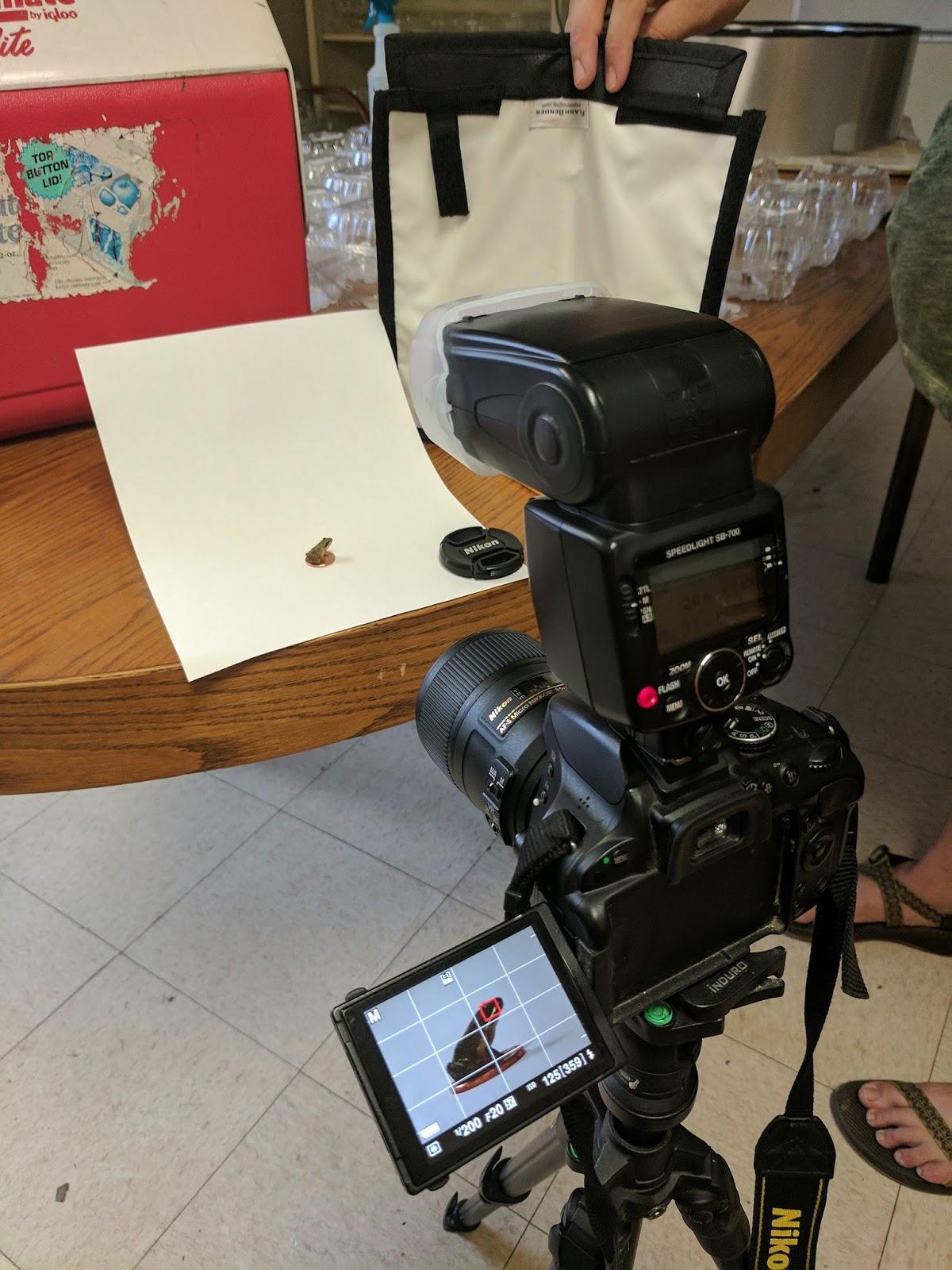 Frog Macro Photography