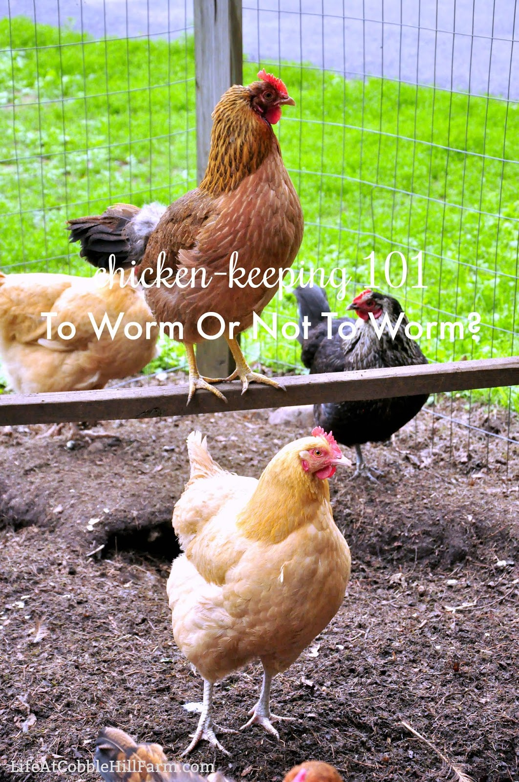 Chicken Keeping: To Worm Or Not To Worm? | Life At Cobble