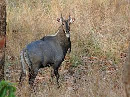 Jhilmeel Jheel wildlife