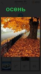 наступила осень и вся дорожка усыпана пожелтевшими листьями