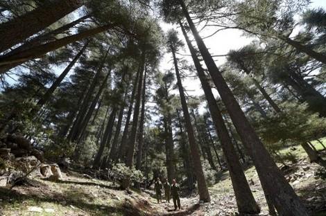 منحة مالية نرويجية تحمي الثروة الغابوية الإثيوبية