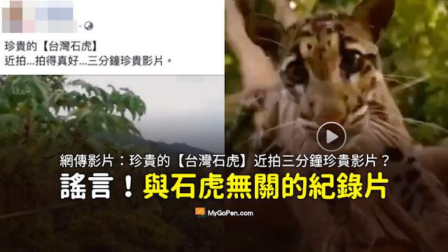 台灣石虎 珍貴影片 謠言 雲豹 三分鐘
