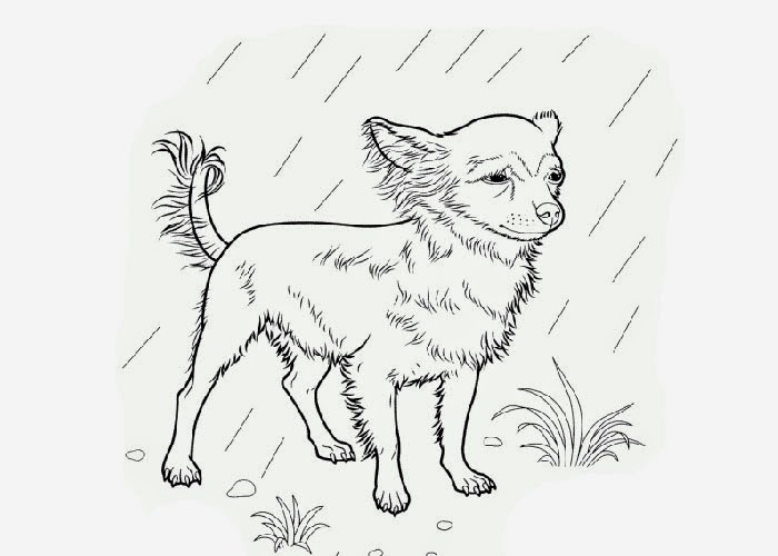 Chihuahua coloring page free coloring pages and coloring for Chihuahua coloring pages