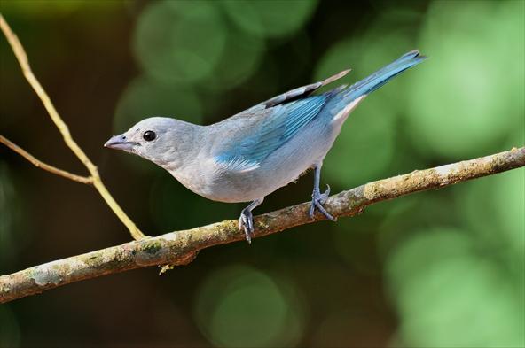 Resultado de imagem para passarinho asas no ninho