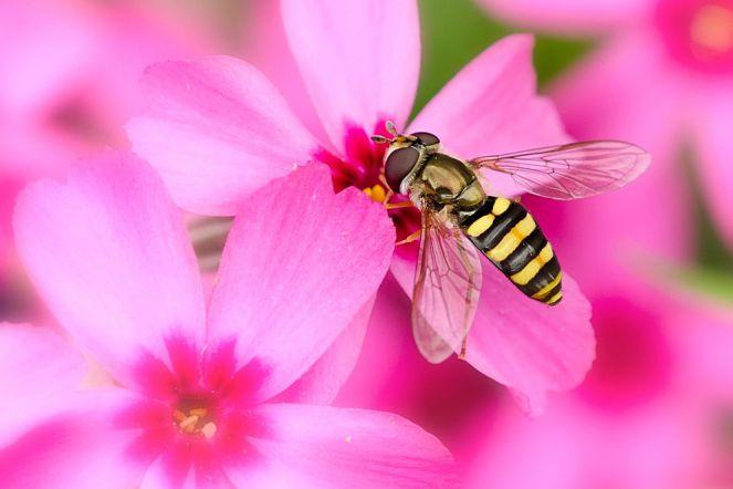 keistimewaan hidup lebah yang patut ditiru orang beriman ary