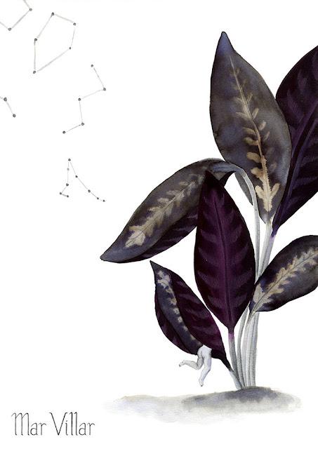 Inktober, Inktober 2016, plantas, calathea, ilustración a tinta, hojas, tinta, aguada de tinta, quink, tinta parker