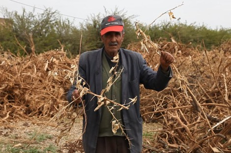The-stress-of-drought-exacerbates-the-suffering-of-farmers