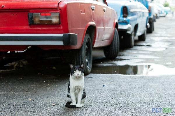 black and white cat cuba