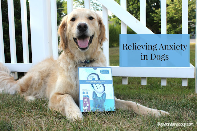 relieving anxiety in dogs safely