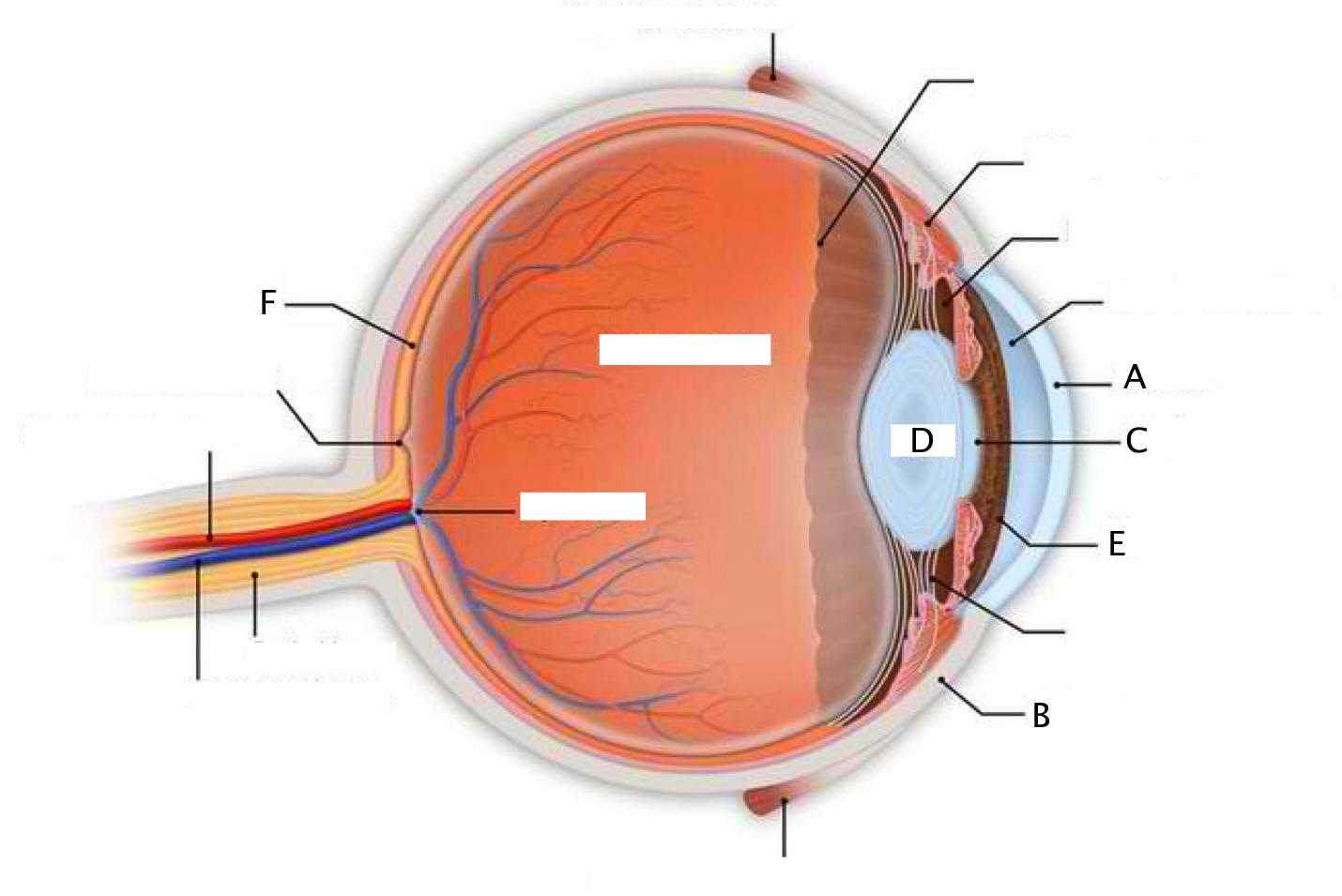 hight resolution of eye quiz