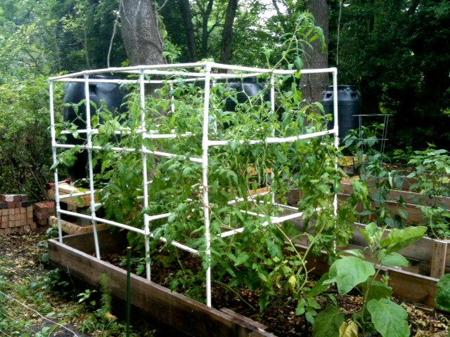 Better Than Never: DIY PVC Tomato Cage