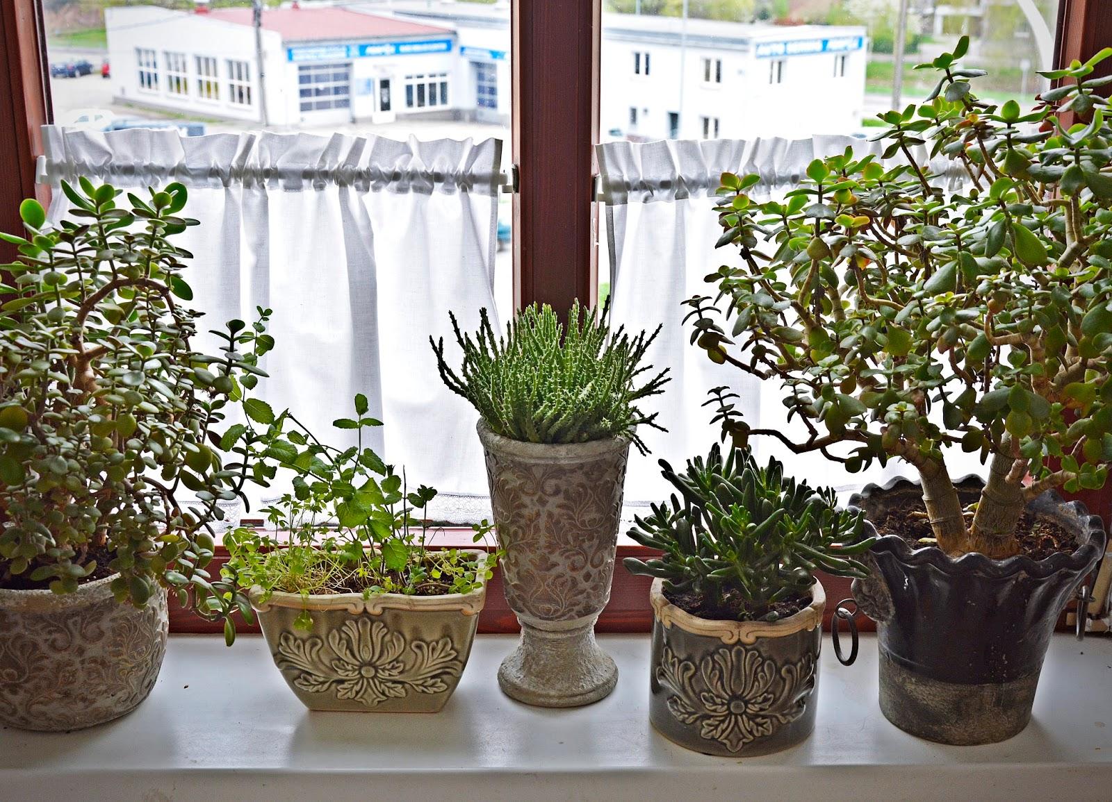 Kwiaty Doniczkowe Home Fragrance
