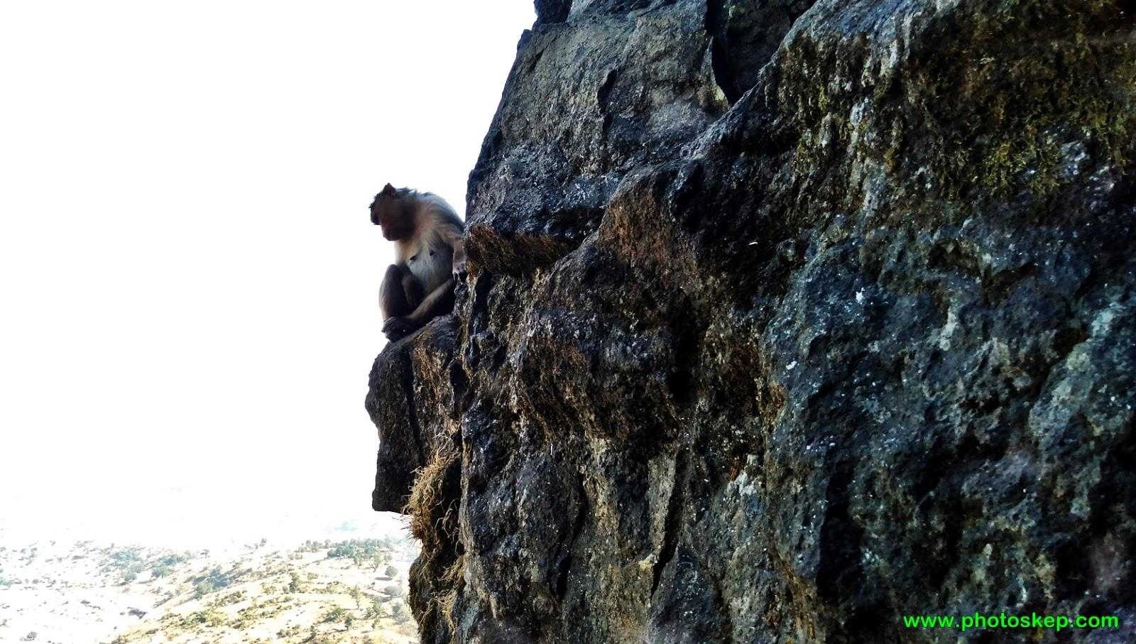 mountain-hills-photo-pictures-wallpaper-images-brahmagiri-hills-Nashik-trimbakeshwar-monkey