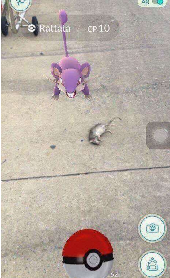 pokemon go funniest screenshot with animal