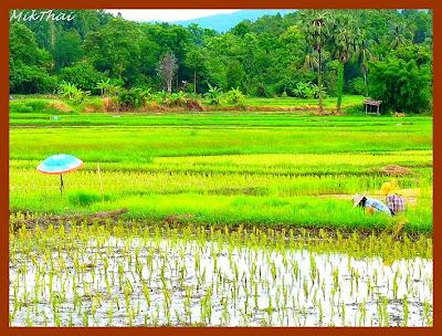 Phrae, Thailande