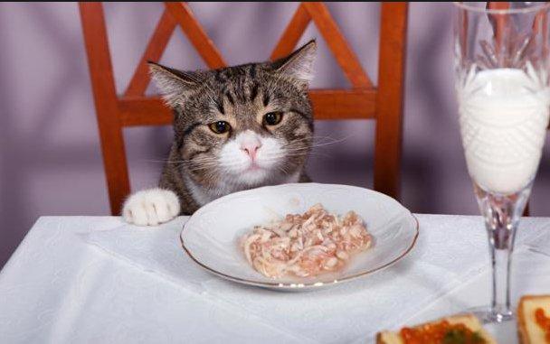 Hasil gambar untuk Jika Kamu Didekati Kucing, Berarti Ada 3 Pertanda Dari Allah