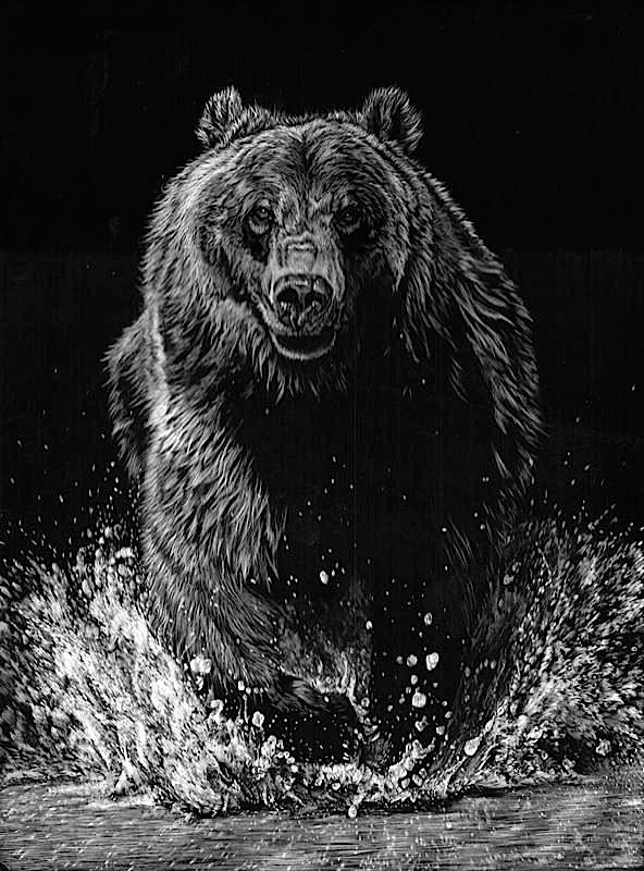 14-Bear-Allan-Ace-Adams-Scratchboard-Drawings-of-Wild-Animals-www-designstack-co