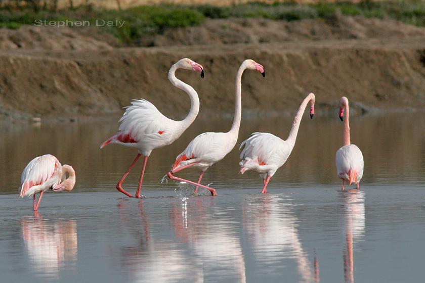 flamingo island berlin escorts