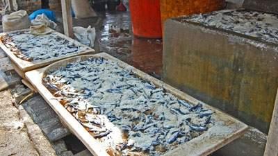 Proses pengasinan ikan