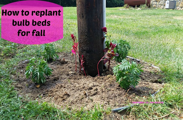 How to replant bulb beds
