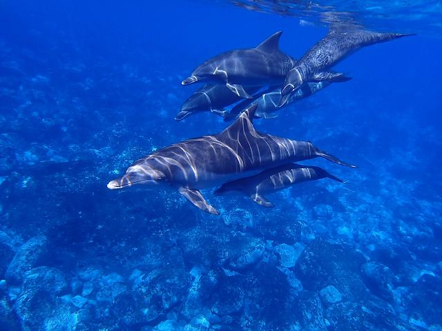 Floride : où aller pour voir des dauphins ?